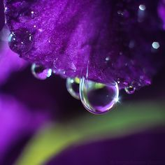 Photograph [Gladiolus] by Tragedienne [Rustle] on 500px