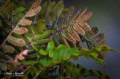 Wild Ferns