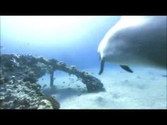 432 Hz & Schumann Resonance Meditation Music VI (with dolphin sounds and Gyuto Monks) - YouTube