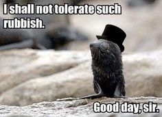 I found him a monocle and a jaunty top hat. - Imgur
