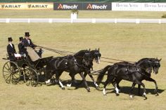 Photos - Alltech FEI World Equestrian Games 2014 in Normandy