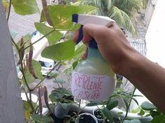 Como Fazer Repelente Caseiro Para sua Horta??? (combate todas as Pragas ) - YouTube