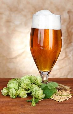 From dry hopping to alpha acids, hops are an essential brewing ingredient that is incredibly versatile with endless possibilities.
