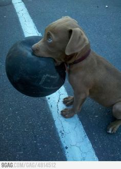 Awww, the ball is as big as he is.