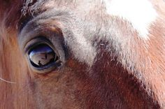 Your Turn: The Healing Power of Horses Relationship Building Skills, Animal Euthanasia, Horse Outline, Wake Forest University, Horse Anatomy, Types Of Animals, Majestic Animals, Dark Places, Horse Care
