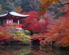 Природа просто взрывается всеми цветами, туманным утром и дождями, которые…