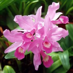 beautiful lilac flowers - Google Search