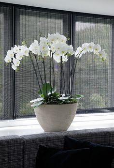 how to care for orchids after blooms fall off - Orchids - Orchideen