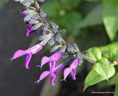 Purple flower, Kew Gardens