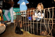 Jill Robinson: The hurt, the horror and happiness of rescuing bears: On the cruelty of bile farms, her pride at the rescuing 600 bears and the incredible animal lovers helping her end bear bile farming.  Q. When you first set foot on a bile farm in 1993, did you ever imagine that one day Animals Asia would run sanctuaries in China and Vietnam?