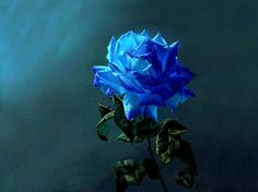 Blue Rose <3 - Flowers Wallpaper ID 1175537 - Desktop Nexus Nature
