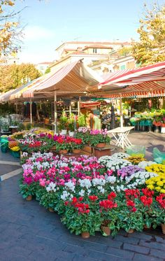MARCHÉ AUX FLEURS COURS SALEYA in NICE, discover the capital of the French Riviera