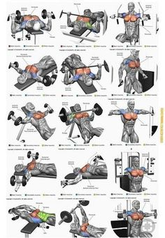 The Complete Biceps Training Guide For Maximum Arms Develo Chest Workout Routine, Best Chest Workout, Chest Workouts, Gym Workout Chart, Gym Workout Tips, Dumbbell Workout, Fitness Workouts, Weight Training Workouts, Workout Posters