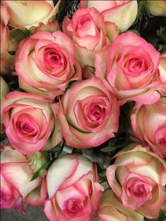 Rose 'Jumilla'...Sold in bunches of 10 stems from the Flowermonger the wholesale floral home delivery service.