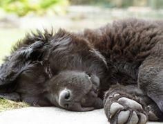 so cuddly. Newfoundland | Petside