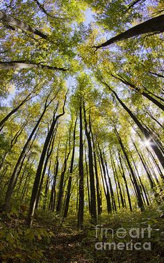Colorful Trees in Shenandoah National Park