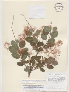 ,Resources for Botanical Sketchbooks, , Resources for Art Students at CAPI::: Create Art Portfolio Ideas milliande.com, Art School Portfolio Work, , Botanical, Flowers, Plants, Leaves,Stem Seed, Sketching, Herbarium001.jpg 1,112×1,482 pixels