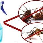 Φτιαχνουμε το σπρεϊ που εξαφανιζει κουνουπια-κατσαριδες-μυγες σε μολις 2 ωρες Tips, Counseling