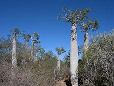 Le parc national de Tsimanampetsotsa est un des premiers sites RAMSAR de Madagscar