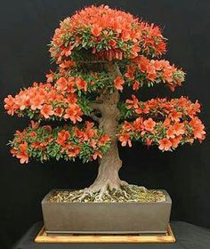 I ❤ the color if this bonsai