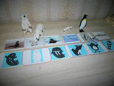 Montessori, Goats, Explorer, Tour, Animals, Albums, Images, Winter Time, Arctic Animals