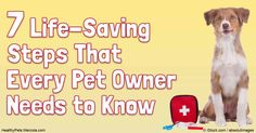 Having an emergency plan in place ahead of time can save your pet's life if and when an emergency medical condition occurs. http://healthypets.mercola.com/sites/healthypets/archive/2016/07/01/animal-emergencies.aspx