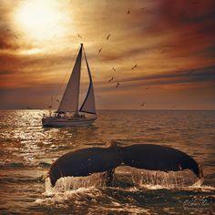 whale tail rising above the sea at sunset & sailboat cruising by Beautiful Sunset, Beautiful World, Luxury Boat, Luxury Travel, Sail Away, Am Meer, Puerto Vallarta, Ocean Life, Marine Life