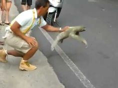 Sloths: I believe I can fly   9.29.11   @[carrie e boyd]  www.youtube.com/...