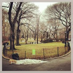 New York's Central Park. A light snow is falling, no accumulation.