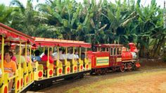 next time in oahu- stuff to do with kids-Pineapple Express train rides are available at the 'http://www.dole-plantation.com'  at the Dole Plantation in Wahiawa, on Oahu.