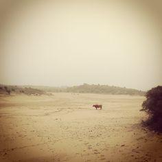 Iedere wandeling hier is speciaal, met als toetje de zee! Locatie: Bloemendaal. Foto: Brigitte Aubertijn.