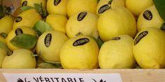Citrons de Menton Ci