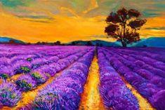 Original oil painting of lavender fields on canvas.Sunset landscape.Modern Impressionism Stock Photo