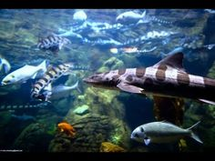 """Relaxing 3 Hour Video of Live Ocean Fish 