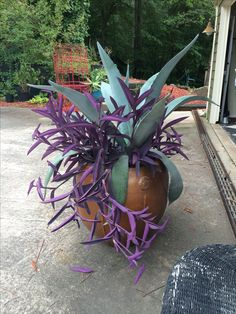 My ( Gardening Girl ) Agave and Purple Wandering Jew...'