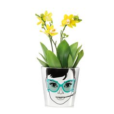 Give your succulents, herbs or flowers a bit more personality with these flower power plant pots. Available styles: Elegant Audrey; Teenage Girl Gifts, Gifts For Boys, Audrey Hepburn, Flower Power, Design3000, Cactus, Creative Labs, Water Conservation, Big Flowers