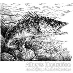 illustration of Part of a wildlife series in my favorite style: detailed pen and ink.