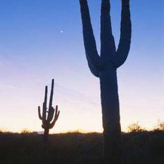 """Image copyright                  Science Photo Library Image caption                                      El cactus saguaro es un símbolo de la región.                                Cuando en junio de 2015 el empresario estadounidense Donald Trump anunció su candidatura a la presidencia de Estados Unidos por el Partido Republicano, afirmó que construiría un """"muro enorme"""" en la frontera con México. Trump es ya candidato oficia"""