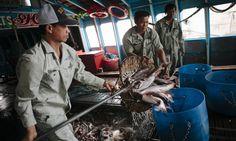 Nhiều cam kết hỗ trợ Việt Nam tại Hội nghị thường niên của Tổ chức Thú y thế giớ... | Vietnam Aquaculture Network - Mạng Thủy sản Việt Nam