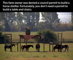 Tiny Horses, Giant Table And Chairs…Or Are They?