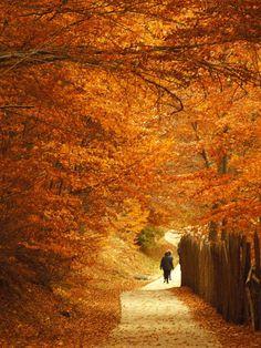Magic on the autumn in #Nymfaio, an amazing village near #Florina, #Greece