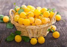 Mirabelky nebo také lidově zvané špendlíky jsou výborným ovocem, které si můžete natrhat všude možně v přírodě. Teď je právě čas jejich dozrávání a vy Celý článek