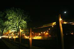 Fairy lights and tree uplights