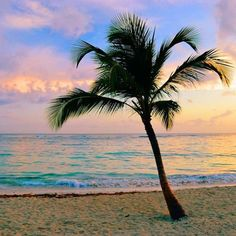 Punta Cana, Dominican Republic via Beautiful Sunset, Beautiful Beaches, Travel Channel, Summer Dream, Travel News, Nature Pictures, South America, Travel Photos, The Good Place