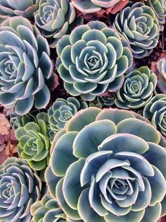 Lovely succulents from this mornings walk.