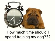 Do you know how long to make a dog training session? Click here for the trainer's advice on this common question:  http://mastersdegreedogtraining.com/2012/12/10/how-much-time-should-i-spent-training-each-day/