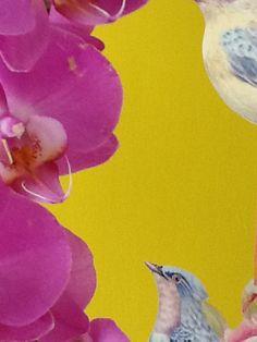 Orquídeas y pájaro