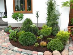 Landscape Design Plans, House Landscape, Front House Landscaping, Backyard Landscaping, Back Garden Design, Evergreen Garden, Back Gardens, House Front, Home And Garden