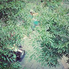 樹葉裡的音樂會