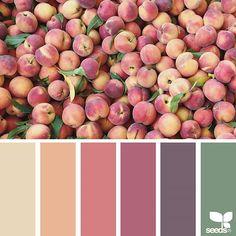 Ooh such a pretty palette! ( { fresh hues } is by . thank you, Sue, for another wonderful Colour Pallette, Color Palate, Colour Schemes, Color Combinations, Paleta Pantone, Color Concept, Palette Design, Design Seeds, World Of Color
